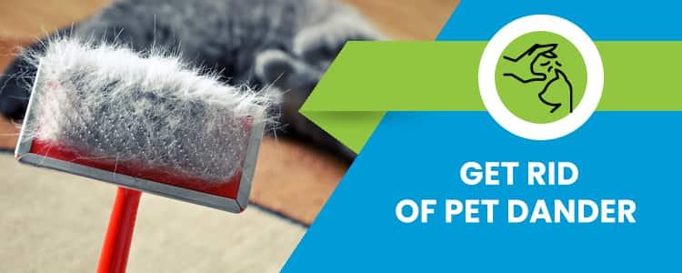Get Rid of Pet Dander