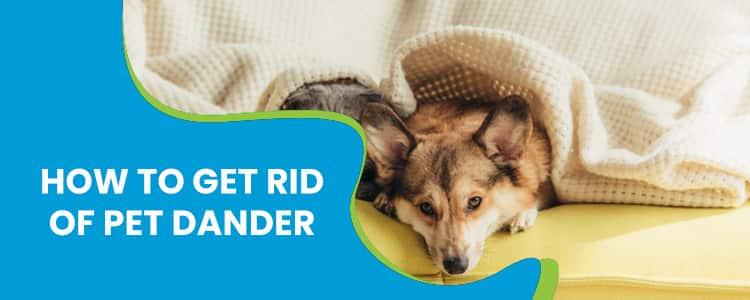 How to Get Rid of Pet Dander